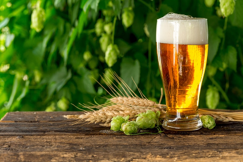 Làm trắng da tự nhiên bằng bia