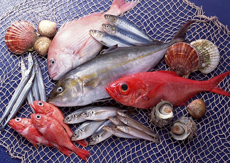 Cá được biết đến là loại thực phẩm giàu dưỡng chất, duy trì tuổi xuân của con người.
