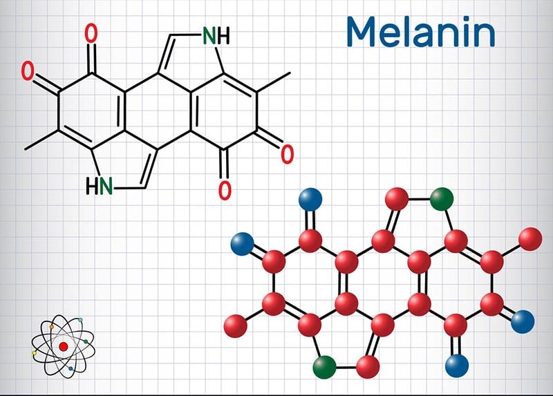 Sắc tố melanin là yếu tố quyết định để hình thành nám da