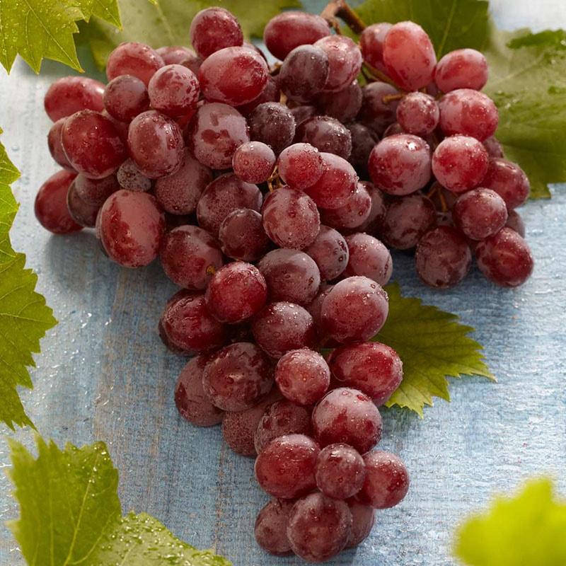 Nho đỏ nổi tiếng vì có chứa resveratrol, một hợp chất có từ vỏ của nho đỏ