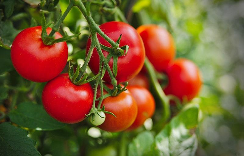 Cà chua giúp da khỏe mạnh hơn