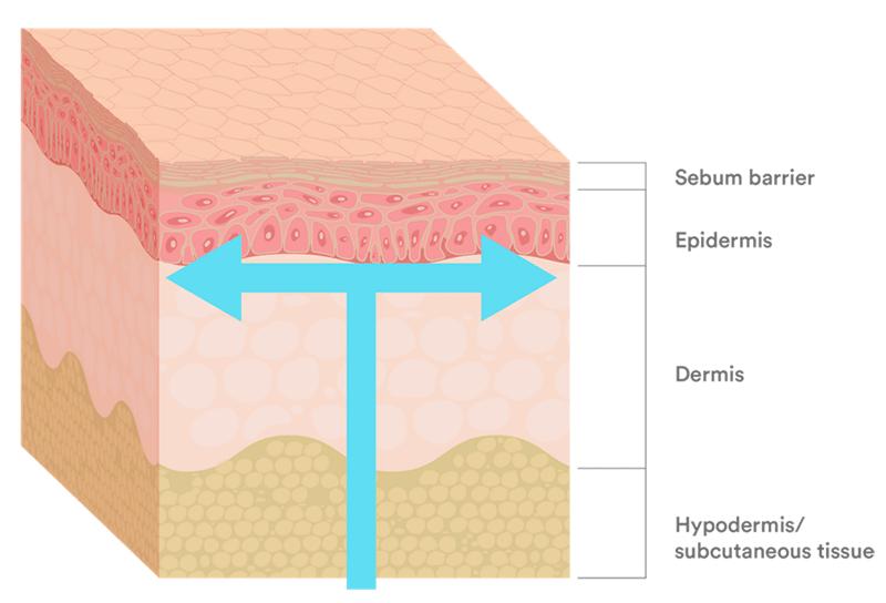 1 trong những nguyên nhân khiến da bị khô là do cấu trúc da