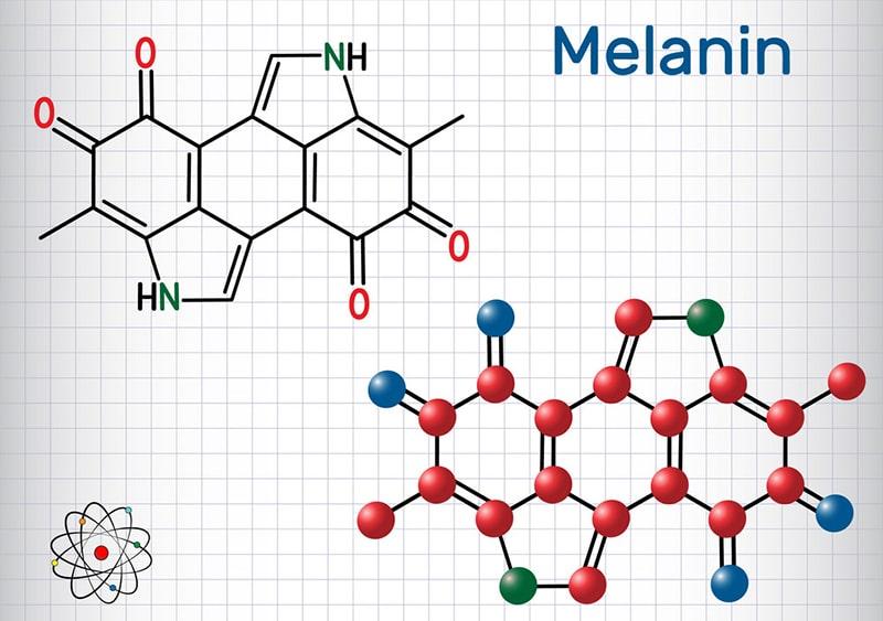 Sắc tố Melanin là gì?