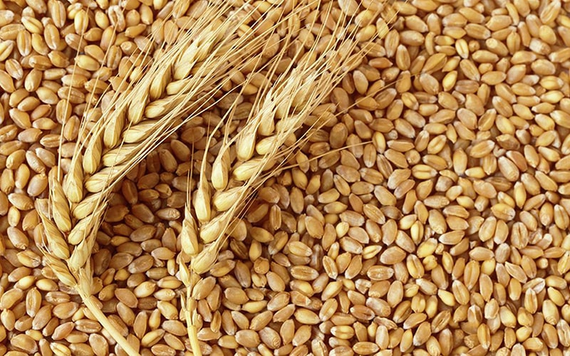 Ngũ cốc tinh chế và lúa mì là những thực phẩm không tốt cho da dầu
